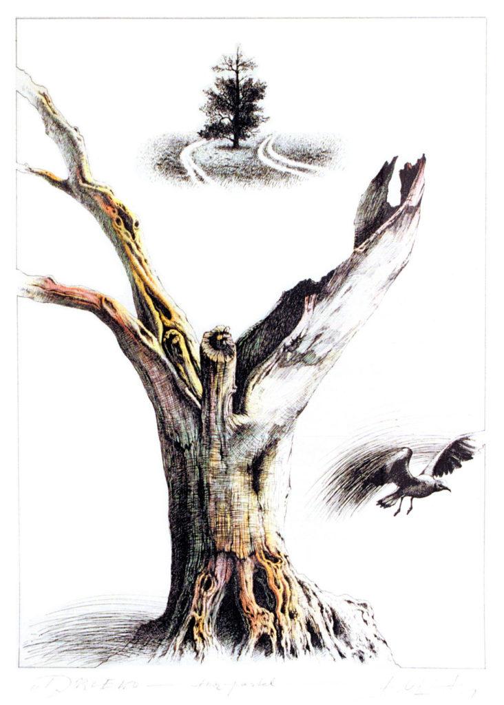 ignacy_bulla_rysunek_drzewo_1000x1399px